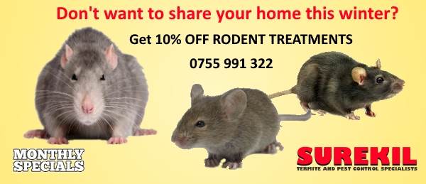 Winter Pest Control 10% off Rodent Treatments