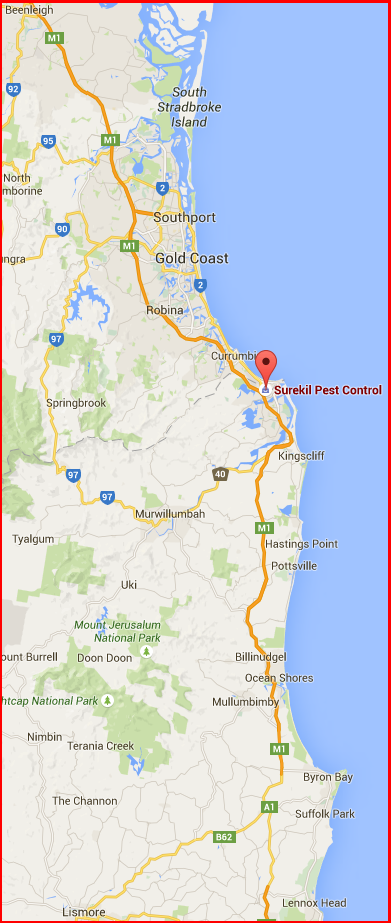 Surekil Pest Control services the Gold Coast, Tweed and Northern Rivers regions from Beenleigh to Lismore